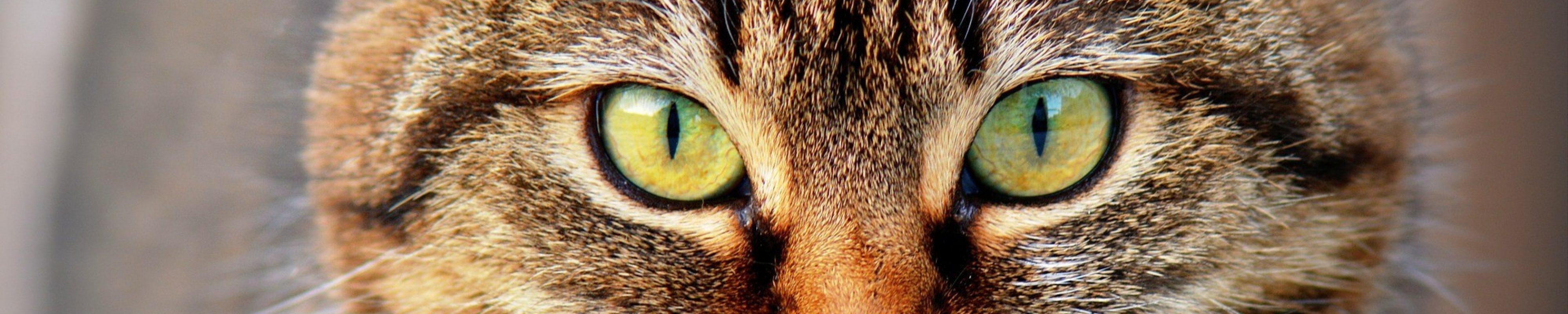 cat-300572_1920